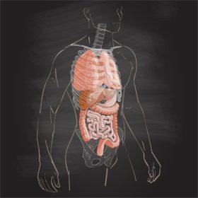 内臓からくる肩こりに~整体マッサージのすすめ