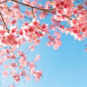 春の不調とアロマセラピー