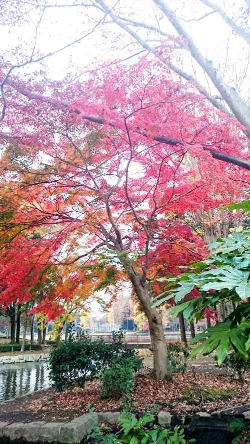 つくば市の洞峰公園の秋