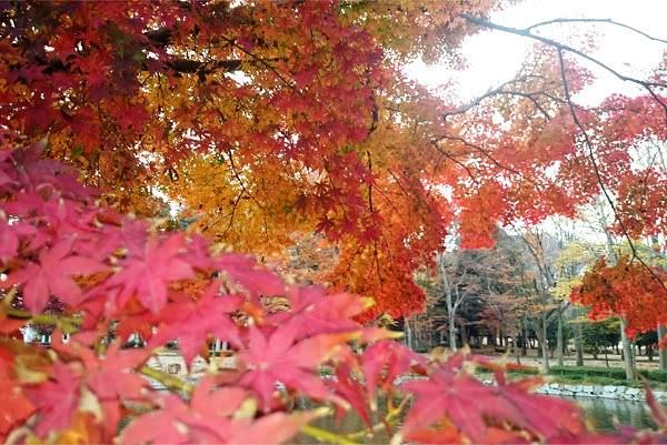 秋のアロマ