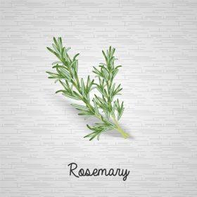 ローズマリー精油を使用したリンパマッサージ
