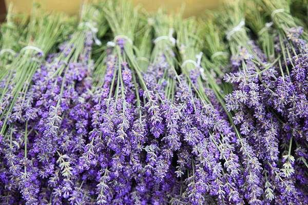 ラベンダー(lavender)について、ハーモニーアロマつくば店より