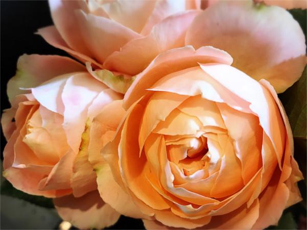 生け花の魅力